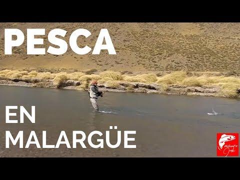 PESCA, Pesca con Mosca, Pescando, Río Atuel, Fly Fishing, COMO PESCAR 🎣