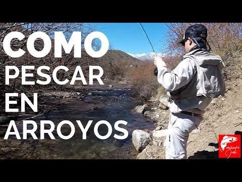 COMO PESCAR ARROYO 🎣🎣 PESCA CON MOSCA, ✅✅PESCANDO ARROYO, PESCADOR, PESCARIA, FLY FISHING