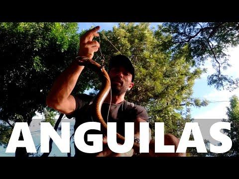 COMO PESCAR ANGUILAS – Pescando anguilas en la zanja con chicos, PESCA URBANA, Street Fishing