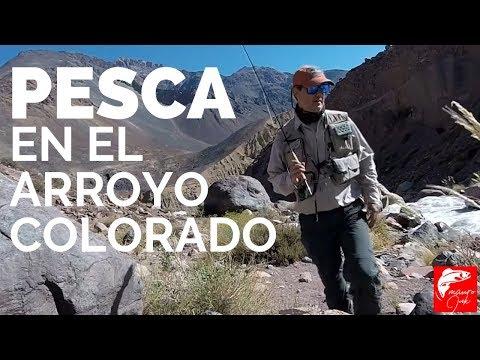 PESCA con MOSCA ARROYO COLORADO 🎣🎣 MENDOZA (COMO PESCAR en ARROYOS de MONTAÑA)  🎣 | FLY FISHING