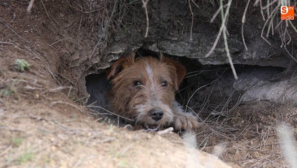 Hunting Dogs - Burrow Breeds