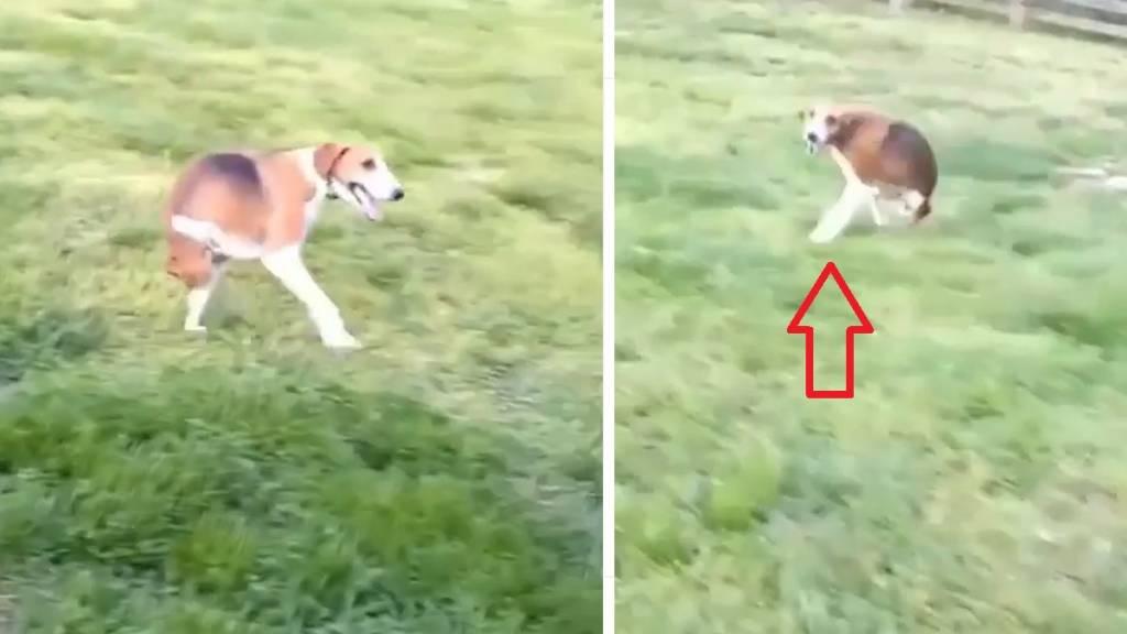 perro cazadores