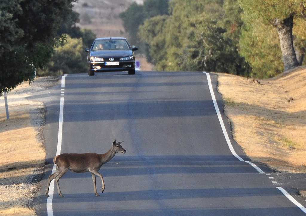 19-.JDG-animales en carretera0009
