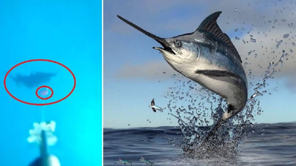 pesca anzuelo