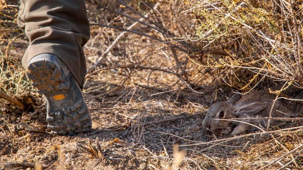 excusas cazador conejo liebre perdiz
