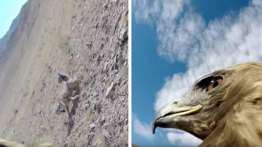 águila gopro